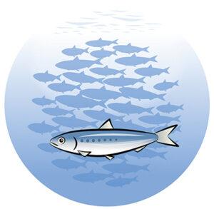 令和3年度芝浦歴史講座 江戸前漁業と芝浦